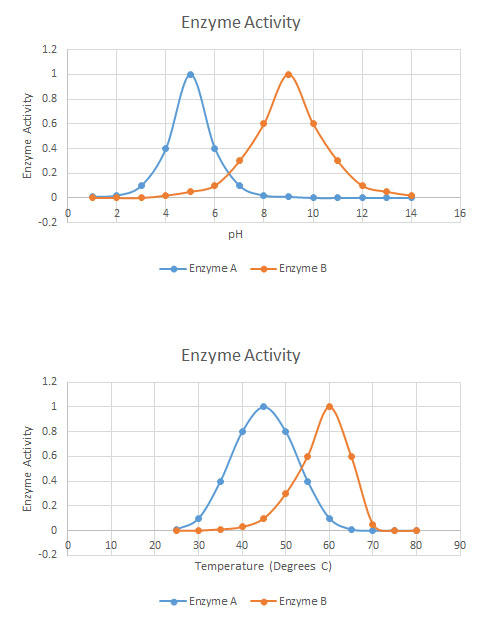 Enzyme_activity_chart