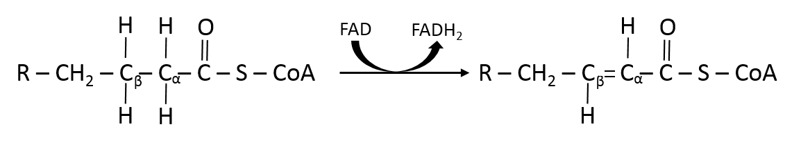 Acyl coa dh reaction beta ox