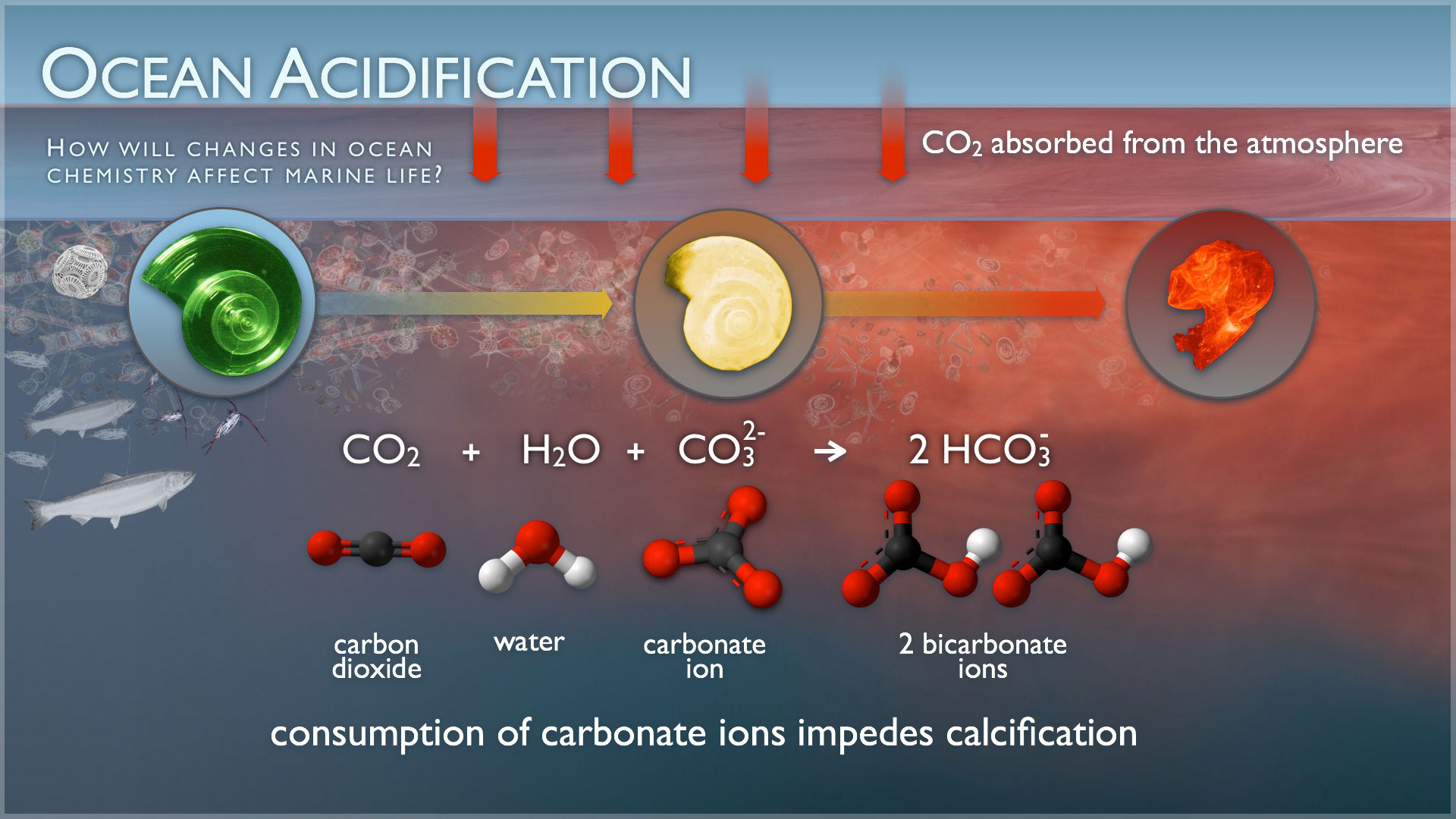 Ocean_acidification